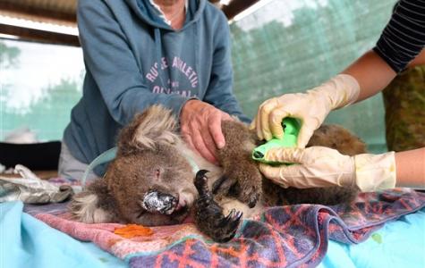 Australia in Crisis: Worst Bushfire Season in 10 Years